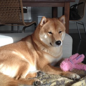 wubba-zabawka dla psa