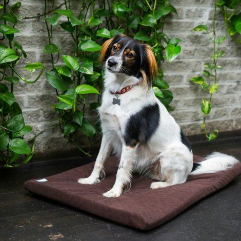 psiamatka-materac dla psa.jpg