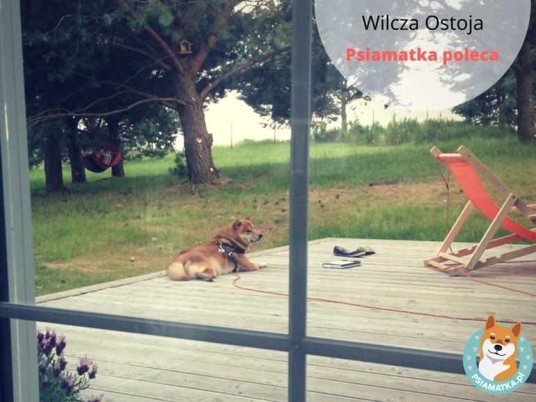 wilczaostoja-banner