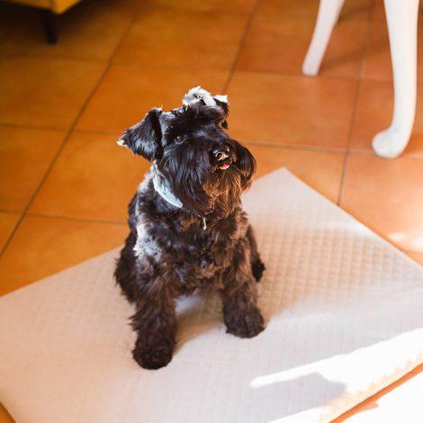 Materacyk-dla-psa-cappucino