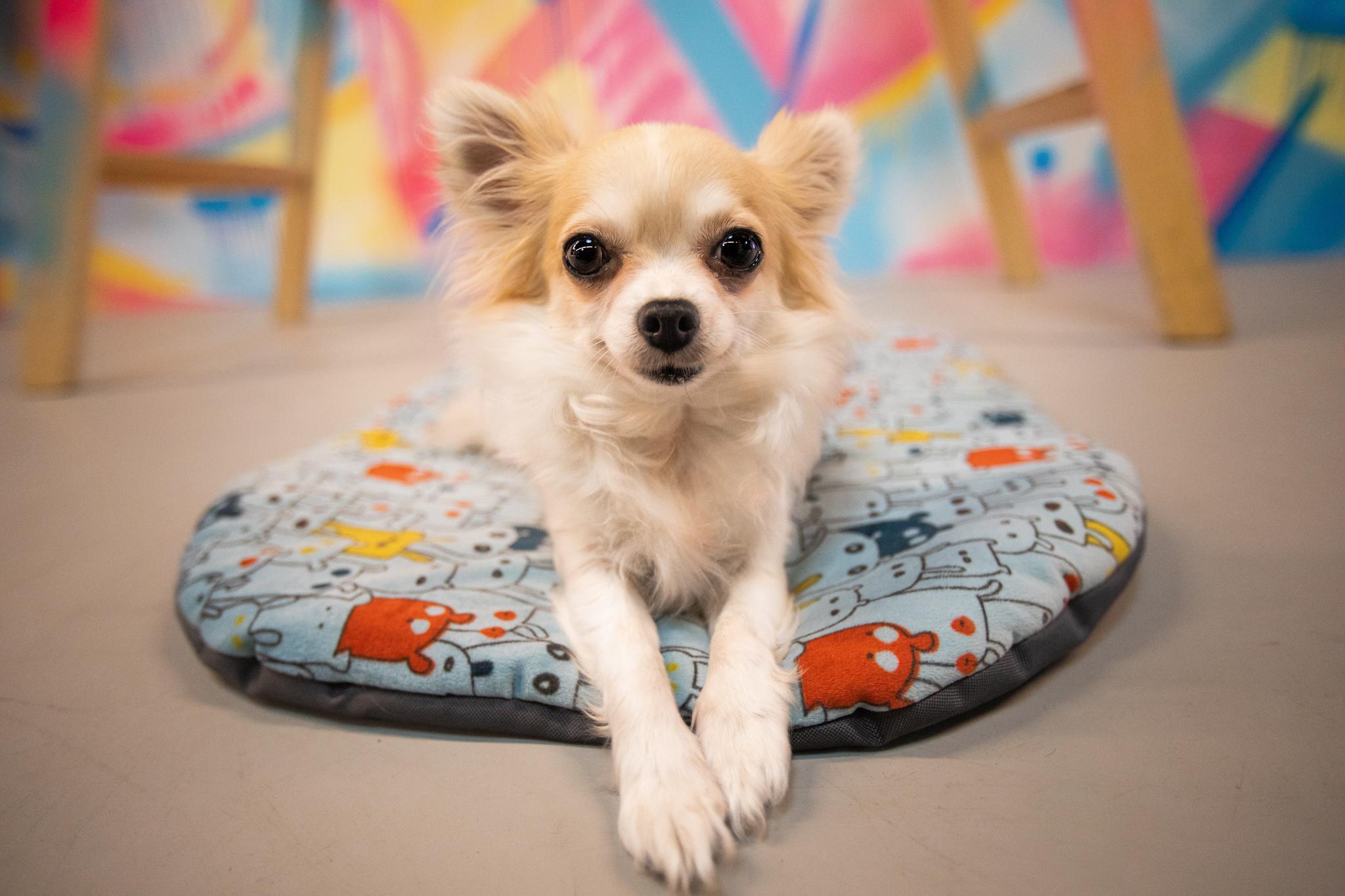 FUNKY Doggo Revolution